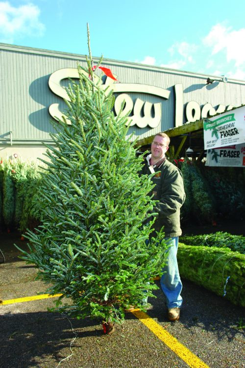 Stew Leonard's Christmas Shoppe Specialists Share Tips & Tricks for Picking  the Perfect Christmas Trees - How To Pick The Perfect Christmas Tree At Stew's Stew Leonard's