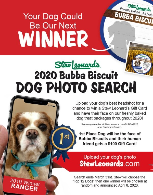 Bubba 2020 Dog Photo Search
