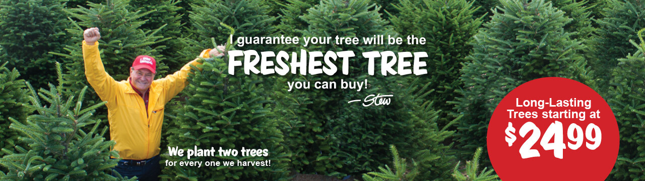The Freshest Tree You Can Buy