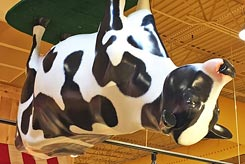 Upside Down Cow